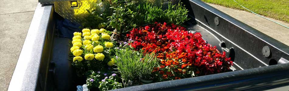 Annual flowers ready to be planted by QuickCall Services in Martinez.