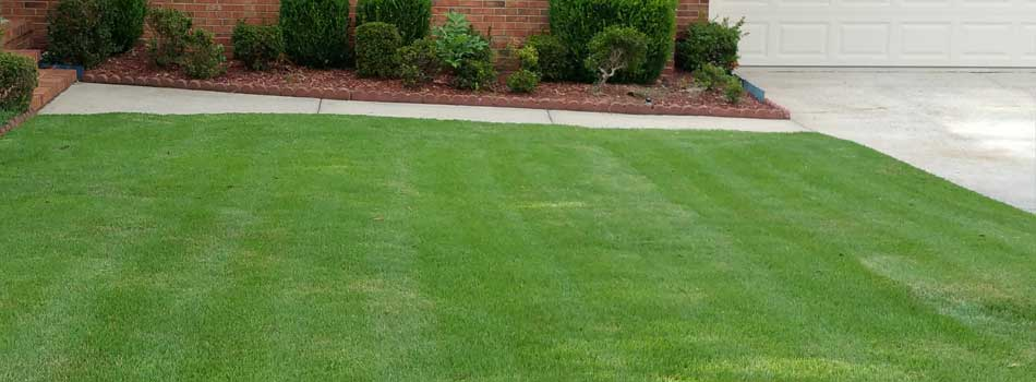 A healthy green front lawn at a home in Evans that receives ongoing lawn care maintenance services.