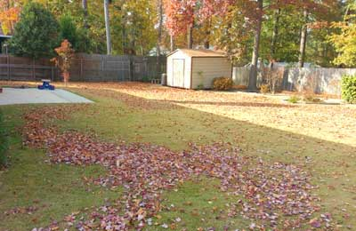 Fall leaves in the backyard of a home in Evans, GA.